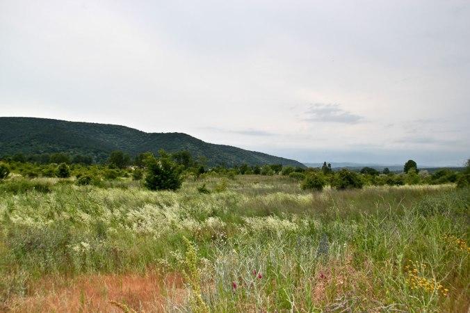 Grüne Wiese in Obzor, Bulgarien