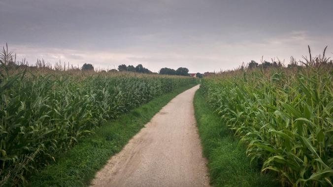 Run, Fatboy, Run #452: Bei Regen durchs Maisfeld...
