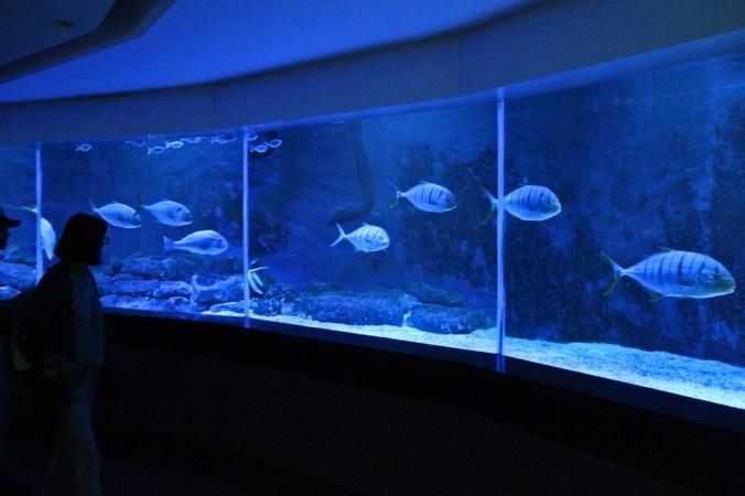 Das 360°-Aquarium macht etwas her.