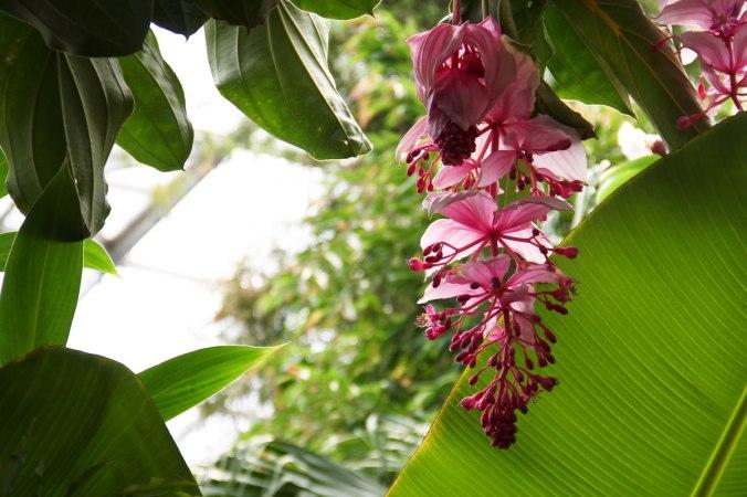Exotische Flora und Fauna, wohin man auch blickt...