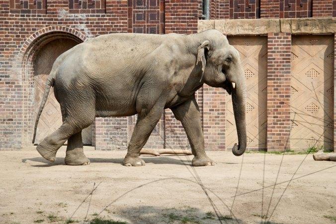 Auch das Elefantenhaus zählt zu den Highlights.