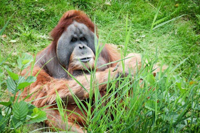 Als Orang-Utan lasse ich es lieber gemütlich angehen...