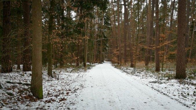 Ein kurzes Stück auf verschneiten Waldwegen