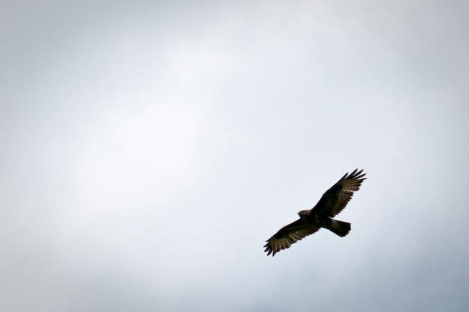 ...und fühlt sich den Greifvögeln ganz nah
