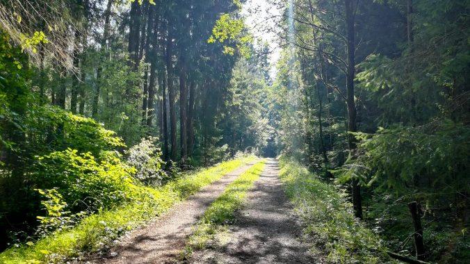 Der Wald sorgte zumindest für ein wenig Abkühlung...