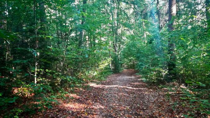 Im Wald oder im Dampfbad?
