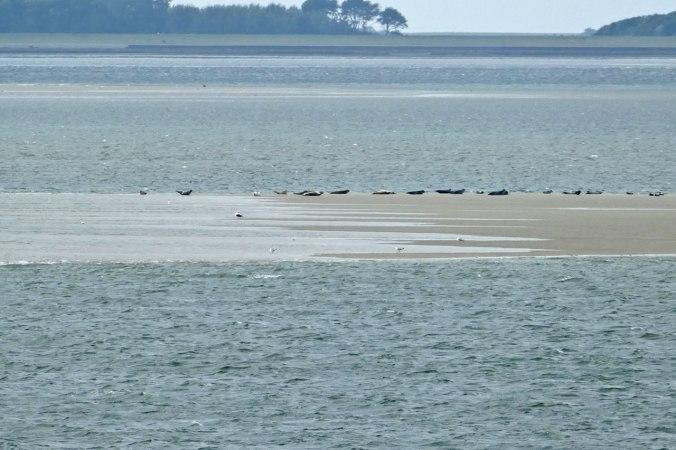Unser erster Blick auf die hier noch weit entfernten Seehundbänke