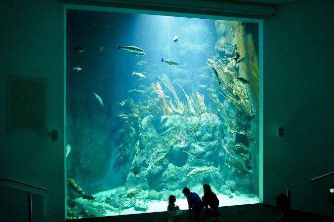 Ein gigantisches Aquarium mit Stören