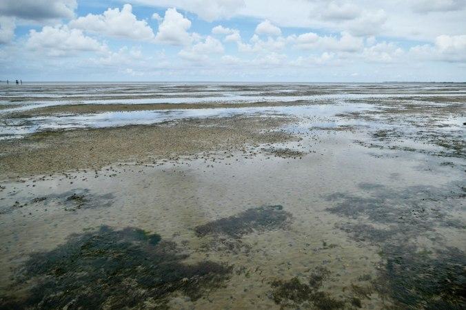Der erste Blick auf das faszinierende Wattenmeer bei Ebbe