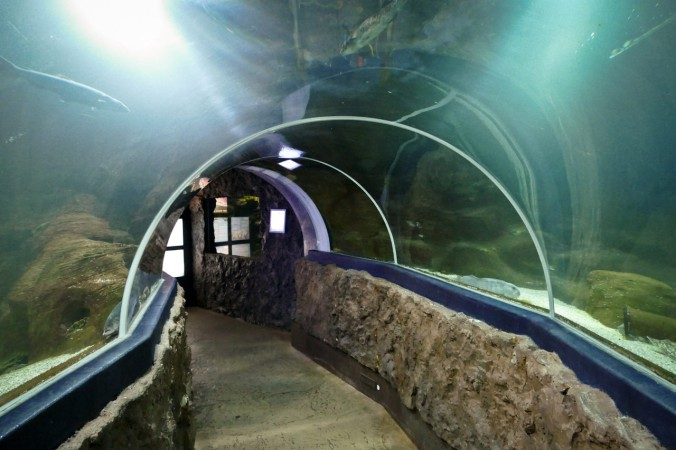 Der 360°-Tunnel im Aquarium Sylt