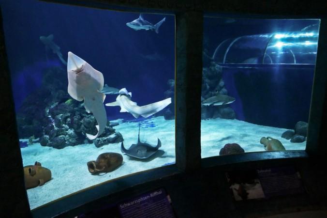 Das beeindruckende große Becken mit Rochen und Haien
