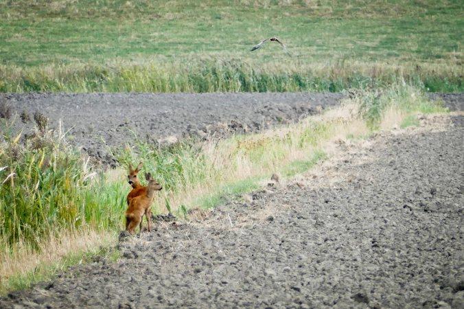 Auf der Radtour erblickt: wilde Tiere im hohen Norden