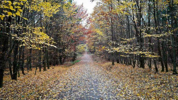 Ein Lauf durch den herbstlichen Wald...