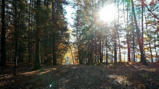 Perfektes Laufwetter im November
