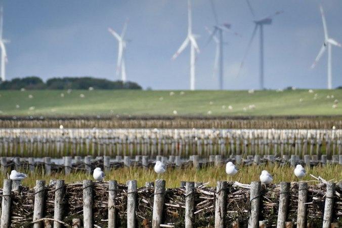 Die Nordsee in einem Bild: Windräder, Schafe und Möwen