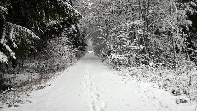 Hätte ich mal lieber Schneeschuhe angezogen...