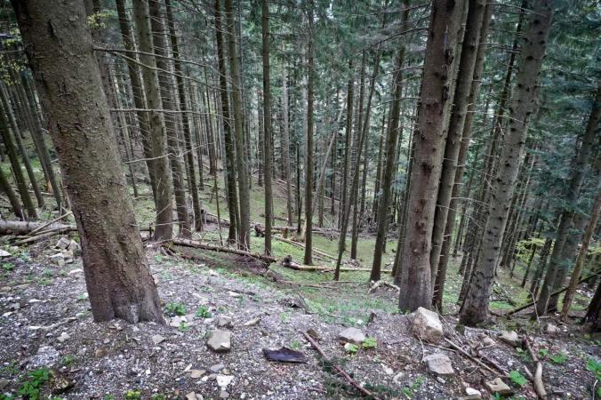 Selbst der Wald bot kaum Schutz vor den Regenmassen