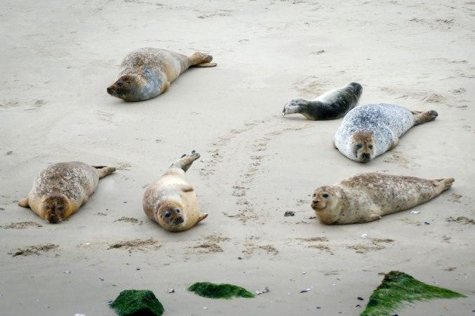 Die Seehunde haben sich durch den Lärm...