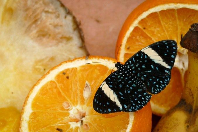 Ein Schmetterling im toll gestalteten Tropenhaus