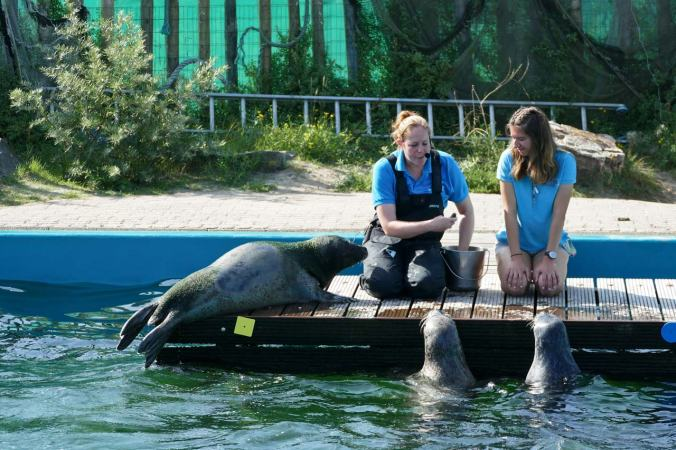 Eine Seehund-Show im viel zu kleinen Becken