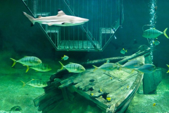Das Großraumaquarium samt Haikäfig