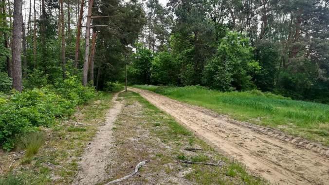 Heute ganz bewusst eine Runde über den federnden Waldboden