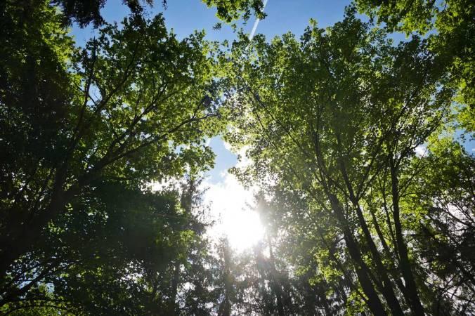 Wunderbare Licht- und Schattenspiele unter dem Blätterdach