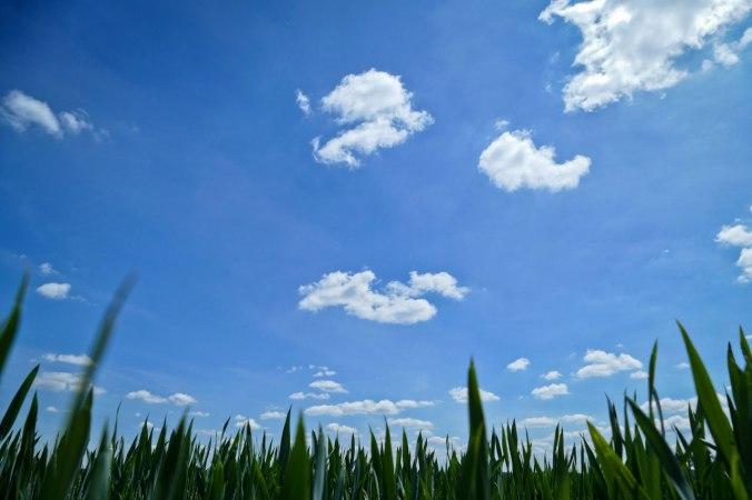 Tiefblauer Himmel über grünem Gras