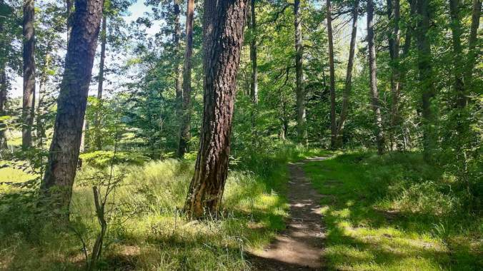 Ein Lauf durch den sonnendurchfluteten Wald