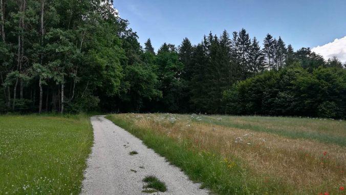 Eine schöne Strecke durch Wald und Flur