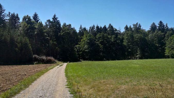 Selbst im Wald war es heute Mittag recht heiß...