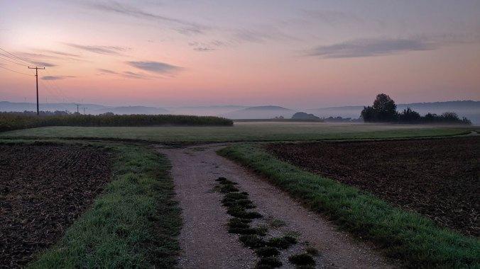 Nebelwände wabern über die Felder