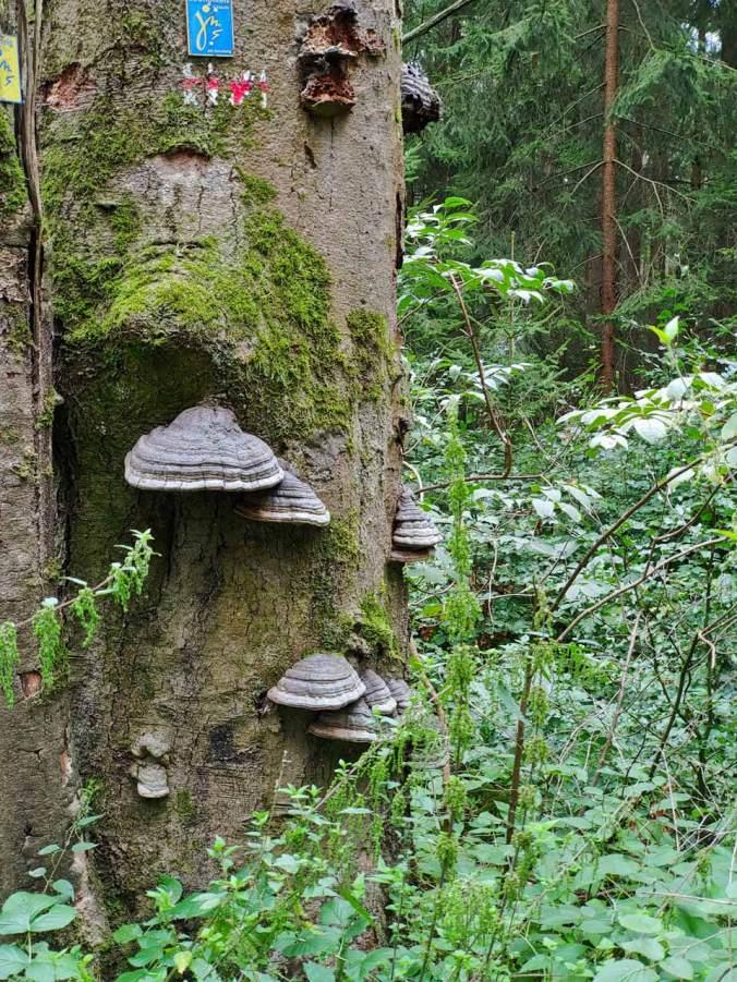Die zweite Hälfte unserer Wanderung führte durch einen imposanten Wald