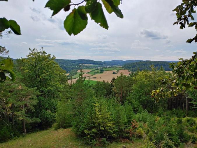 Unser Lieblingsplatz der Wanderung: Ein Gipfel mitten im Wald