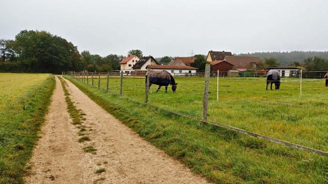 Durch das Herbstwetter vorbei an den Pferden
