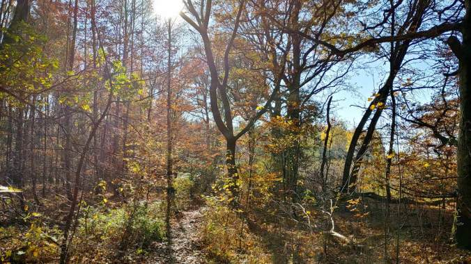 Ein kurzes Stück durch den sonnigen Herbstwald