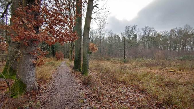 Ein kurzer Abstecher in den winterlichen Wald