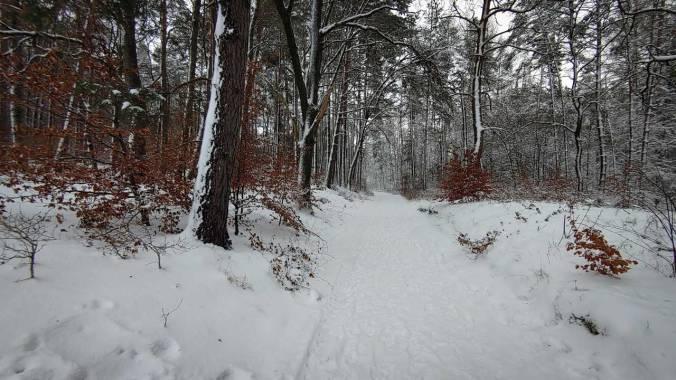 Herrlich knarzender Schnee im Wald