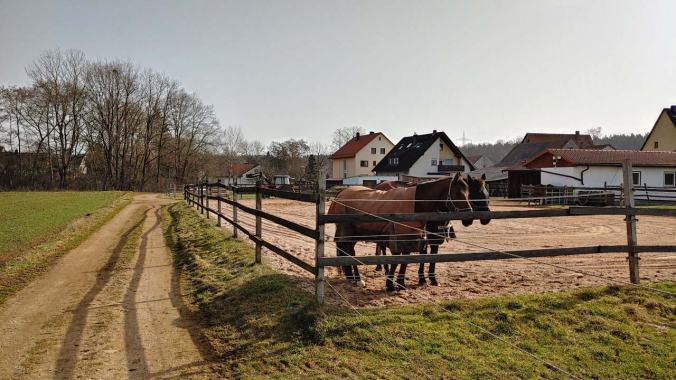Herrliches Wetter und Pferde