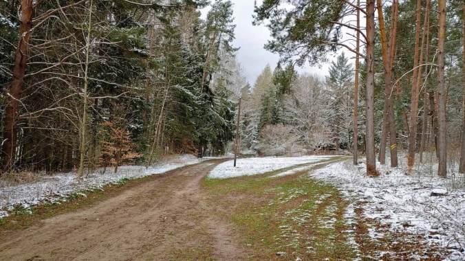 Durch den (leicht) verschneiten Wald