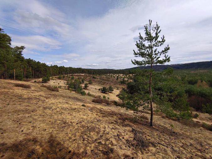 Die beeindruckende Dünenlandschaft mitten im Wald