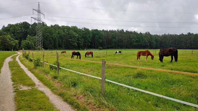 Hallo, liebe Pferde!