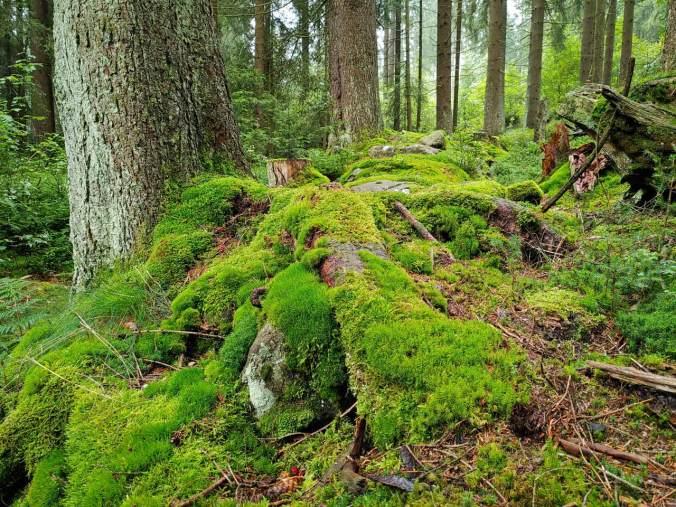 Eine in allen Grüntönen erstrahlende Mooslandschaft
