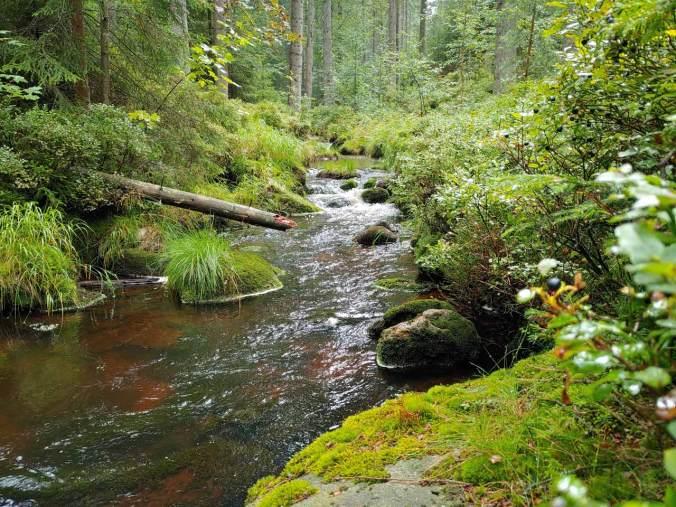 Der Weiße Main bahnt sich den Weg durch den urtümlichen Wald