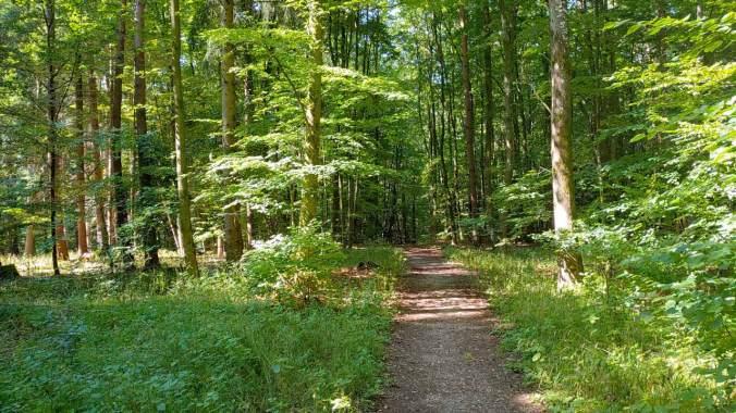 Heute nur ein kurzer Lauf durch den Wald