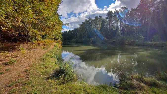 Schöne Trails durch den herbstlichen Wald
